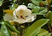 fleur blanche et insectes