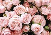TOUTE UNE IMAGE DE ROSES ROSES