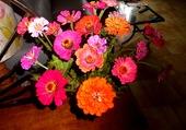 bouquet de zinias