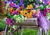brouette de fleurs
