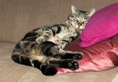 Atchoum fait la sieste