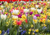 La Hollande au printemps