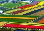 Des champs de tulipes comme