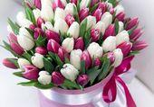 bouquet de tulipes blanches et rouges