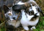 Puzzle animales amitiés