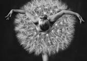 La danseuse et le plumeau