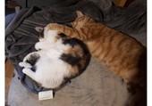 Tendresse de chats
