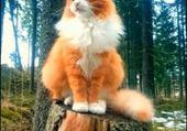 MASTER THE CAT