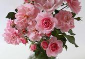 roses épanouies