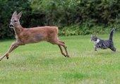 Puzzle La chasse