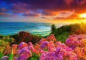 Couché de soleil fleuri