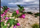 Fleurs sur la plage