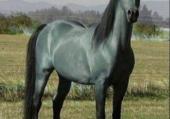 Le petit cheval dans la prairie
