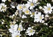 Jolies fleurs de printemps