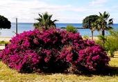 Bel arbuste fleuri