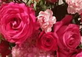 bouquet d'oeillets et de roses