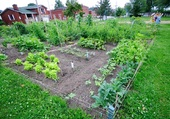 Le jardin de mon quartier