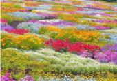500 espèces de fleurs
