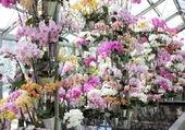 Profusion orchidées