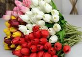 gros bouquet de tulipes