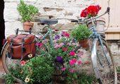 Un vélo dans les plantes
