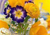 Belles fleurs de printemps