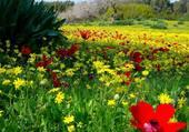 Joli champs fleuri