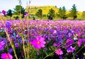 Beau champs de fleurs