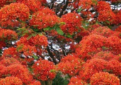 Floraison spectaculaire
