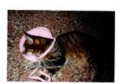 mimic et son bonnet