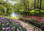 Puzzle tulipes et jacinthes