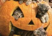 Halloween des chats