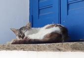 chat en train de dormir