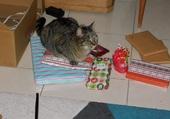 Puzzle Le chat sur les cadeaux