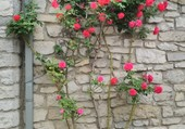 Roses rouges murale