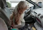 Puzzle Une femme au volant
