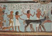 Puzzle Egypte  Vallée des rois