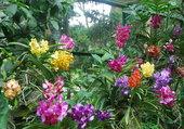 Puzzle superbe collection d'orchidées