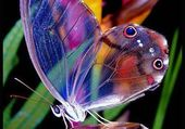 Puzzle WONDERFUL BUTTERFLY