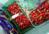 Puzzle fraises cueillies à la ferme des Authieux