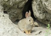 Puzzle Little bunny