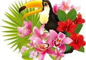 Puzzle joli toucans