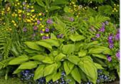 Puzzle Plantes compagnons