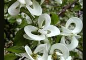 Puzzle Exceptionnelle floraison au printemps