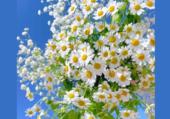 Puzzle Bouquet aérien