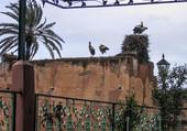 Puzzle les cigognes de Marrakech