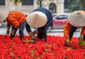 Puzzle PLANTATION EN CHINE