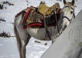 Puzzle Babaji, cheval de trek