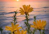 Puzzle coucher de soleil fleuri