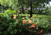 Puzzle Jardin en juin